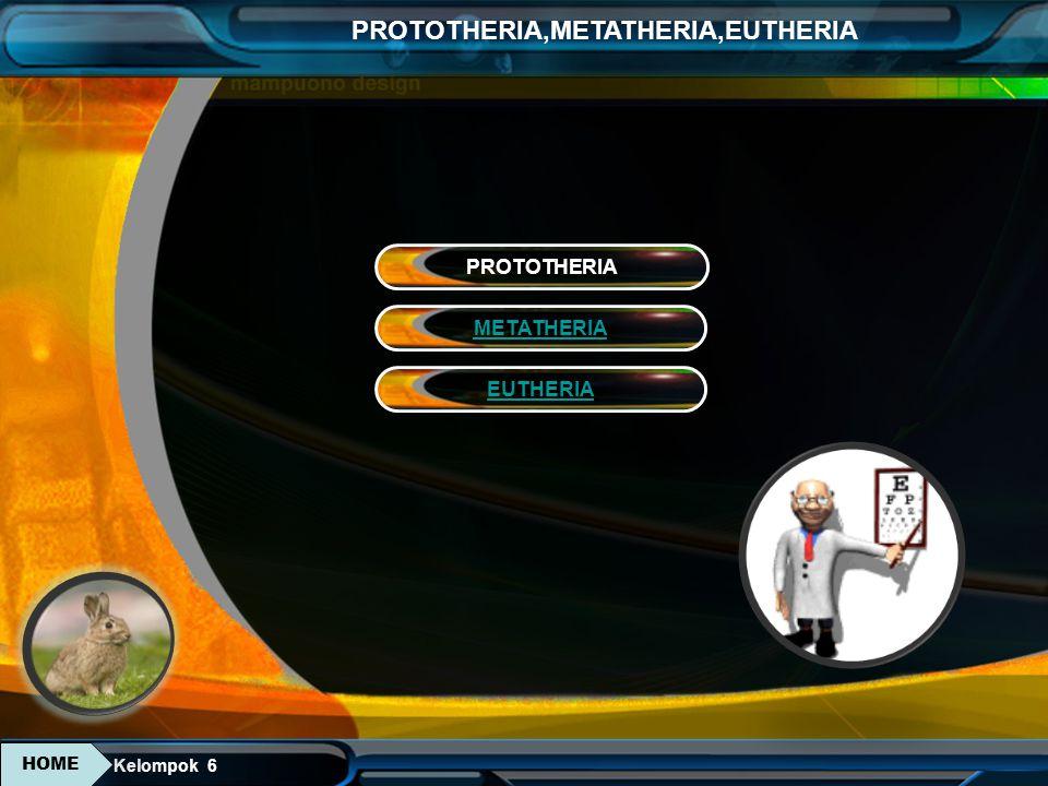 PROTOTHERIA METATHERIA EUTHERIA