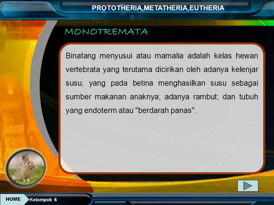 MONOTREMATA