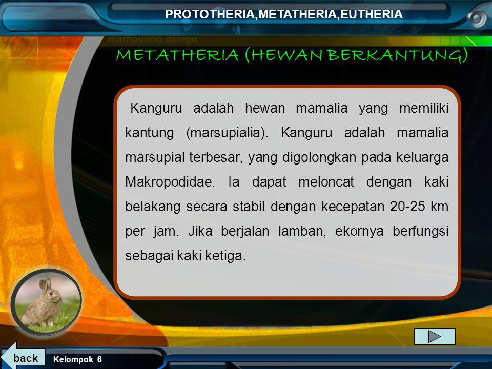 METATHERIA (HEWAN BERKANTUNG)