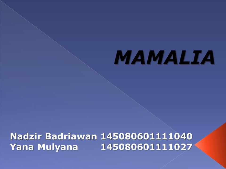 MAMALIA Nadzir Badriawan 145080601111040 Yana Mulyana 145080601111027