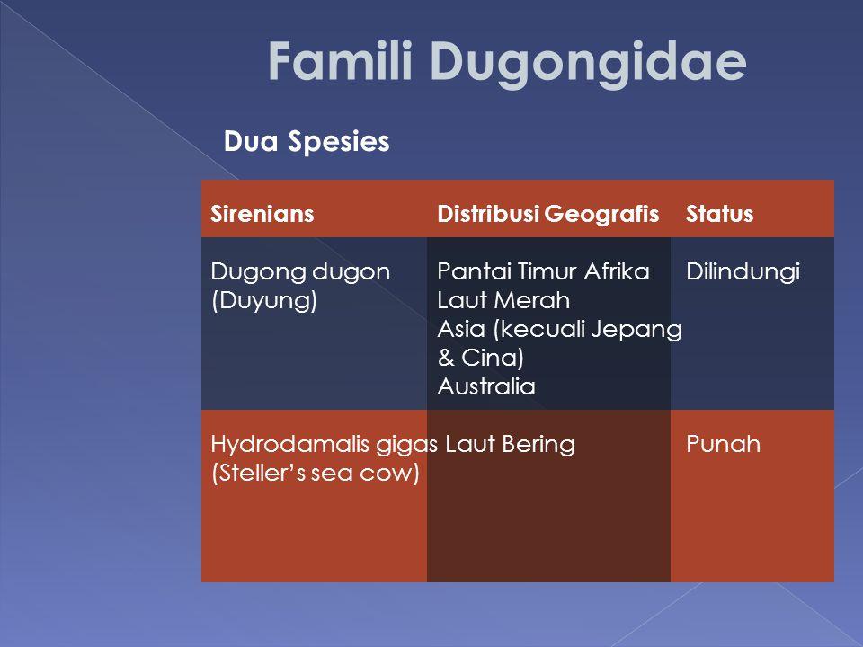 Famili Dugongidae Dua Spesies Sirenians Distribusi Geografis Status