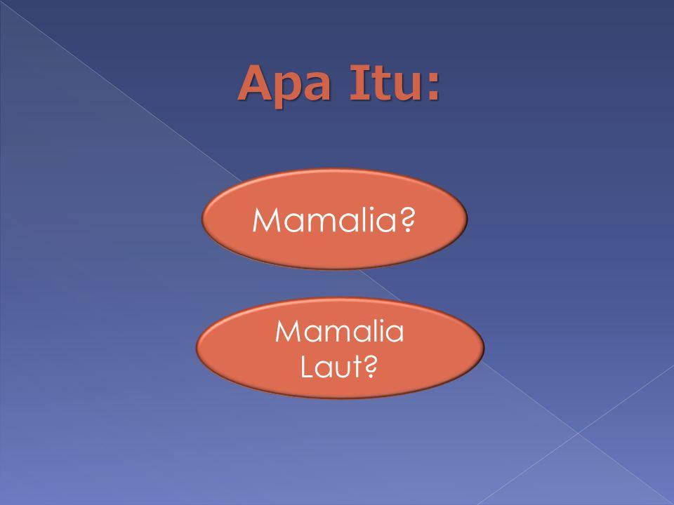 Apa Itu: Mamalia Mamalia Laut
