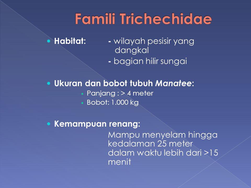 Famili Trichechidae Habitat: - wilayah pesisir yang dangkal