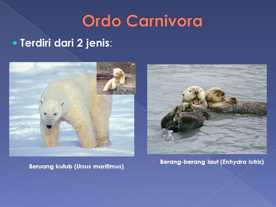 Ordo Carnivora Terdiri dari 2 jenis: