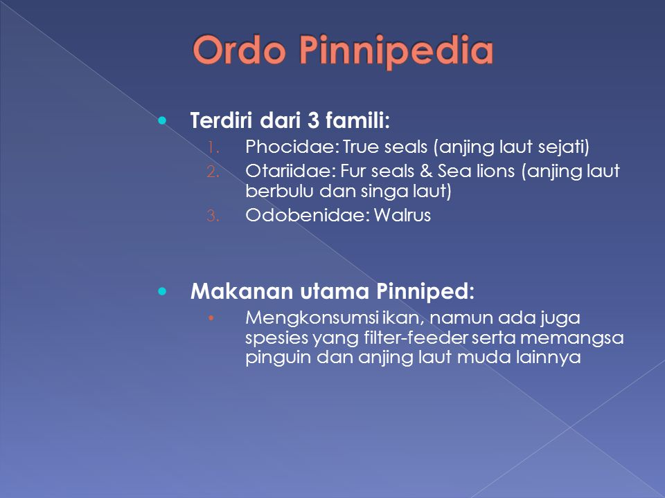 Ordo Pinnipedia Terdiri dari 3 famili: Makanan utama Pinniped: