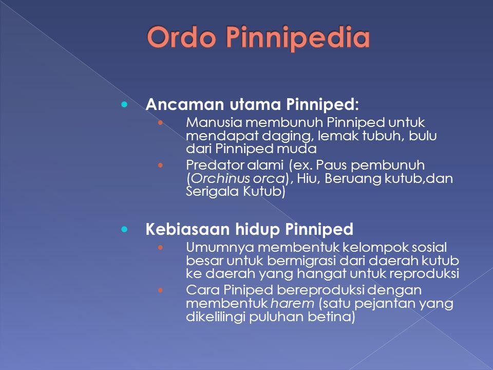 Ordo Pinnipedia Ancaman utama Pinniped: Kebiasaan hidup Pinniped