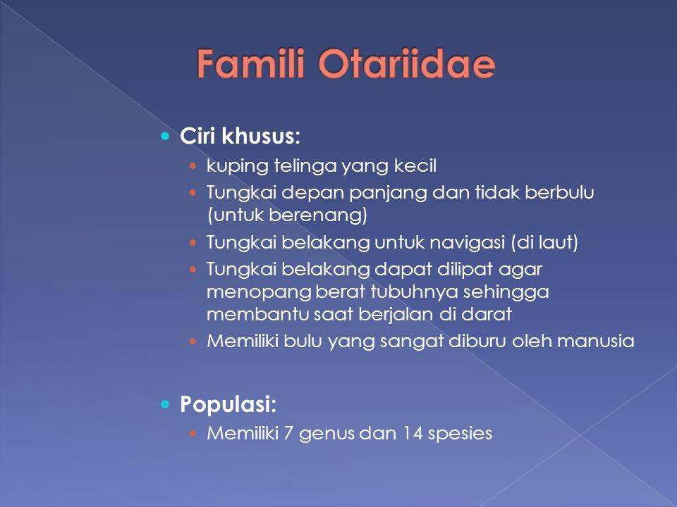 Famili Otariidae Ciri khusus: Populasi: kuping telinga yang kecil