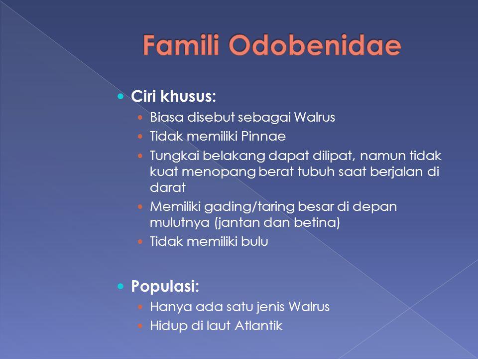 Famili Odobenidae Ciri khusus: Populasi: Biasa disebut sebagai Walrus