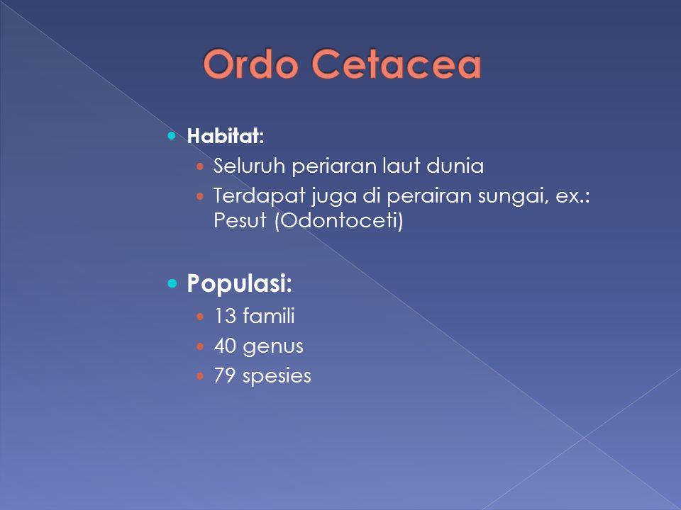 Ordo Cetacea Populasi: Habitat: Seluruh periaran laut dunia