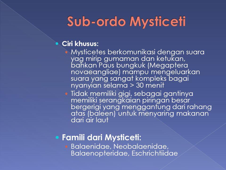 Sub-ordo Mysticeti Famili dari Mysticeti: Ciri khusus:
