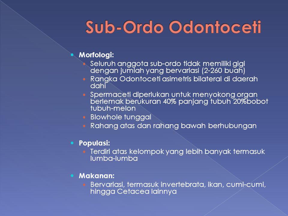 Sub-Ordo Odontoceti Morfologi: