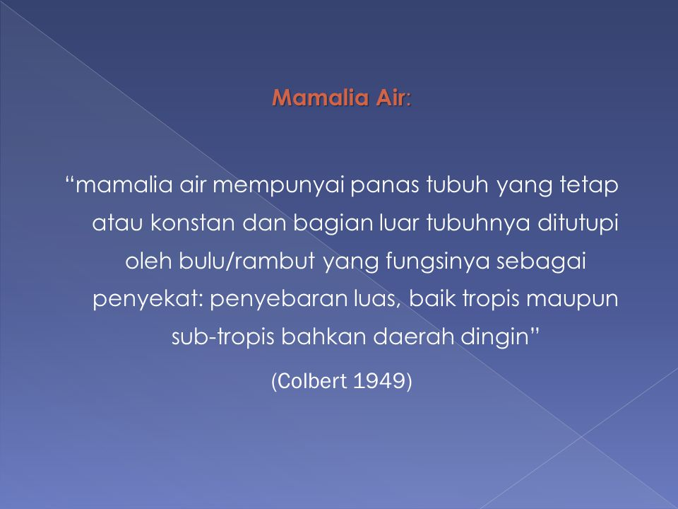 Mamalia Air:
