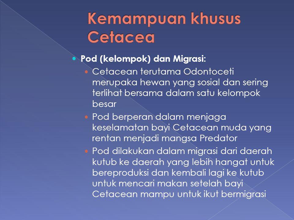Kemampuan khusus Cetacea