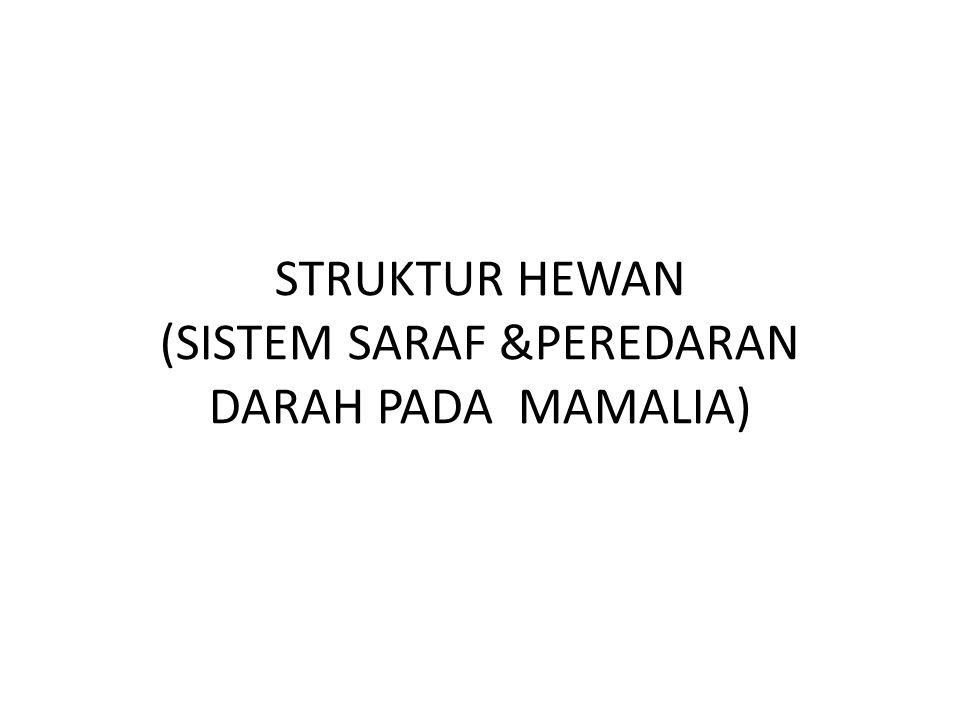 STRUKTUR HEWAN (SISTEM SARAF &PEREDARAN DARAH PADA MAMALIA)