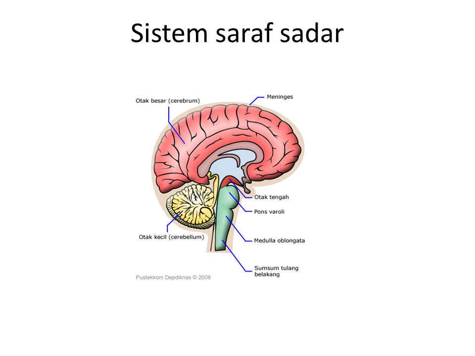 Sistem saraf sadar