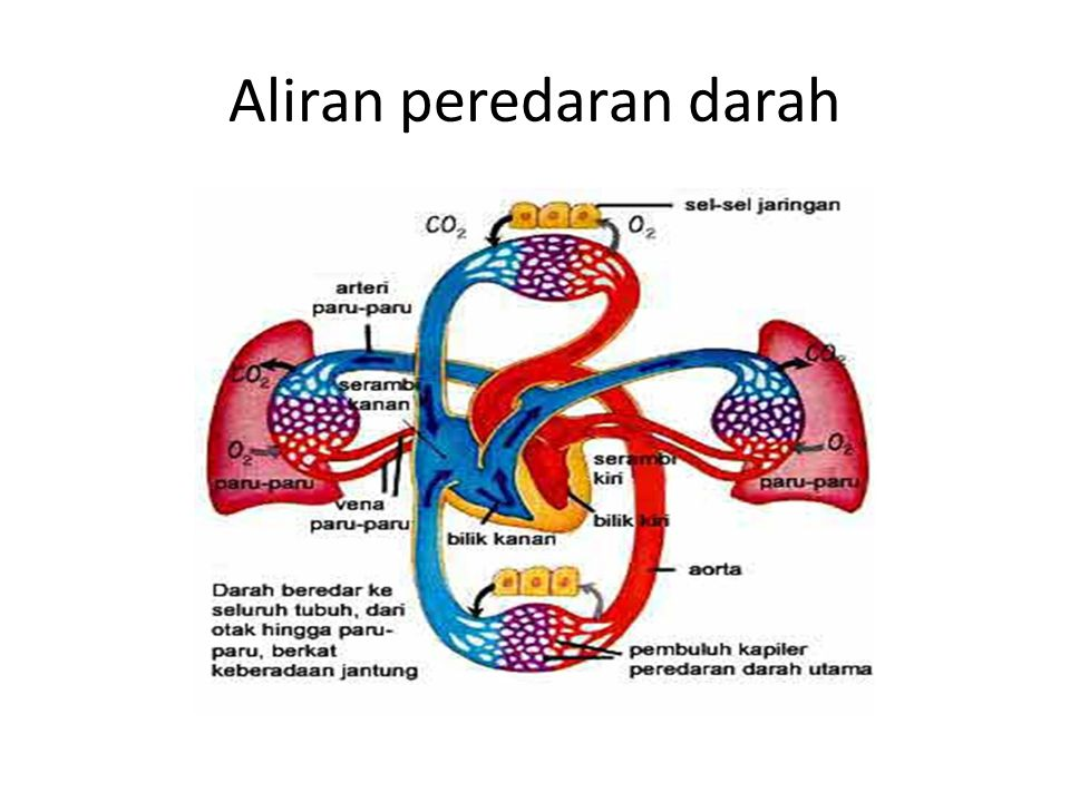 Aliran peredaran darah