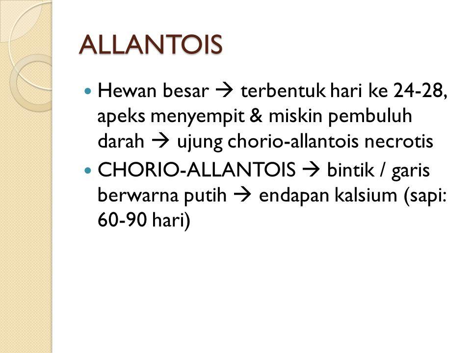 ALLANTOIS Hewan besar  terbentuk hari ke 24-28, apeks menyempit & miskin pembuluh darah  ujung chorio-allantois necrotis.