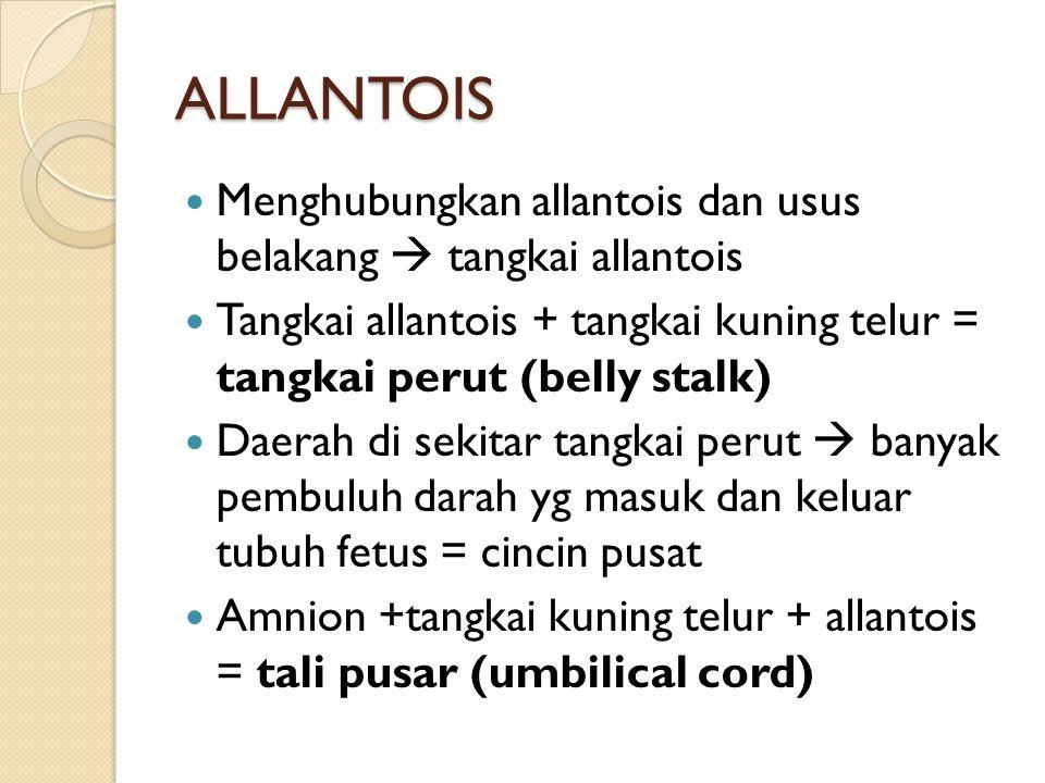ALLANTOIS Menghubungkan allantois dan usus belakang  tangkai allantois. Tangkai allantois + tangkai kuning telur = tangkai perut (belly stalk)