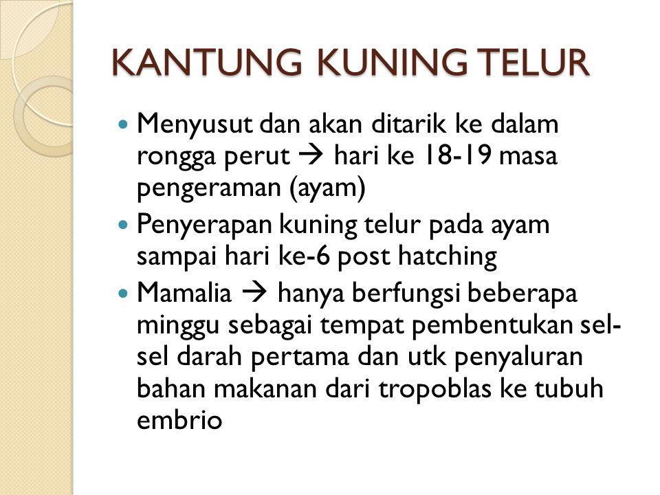 KANTUNG KUNING TELUR Menyusut dan akan ditarik ke dalam rongga perut  hari ke 18-19 masa pengeraman (ayam)