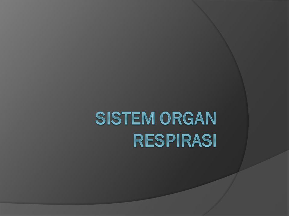 Sistem Organ Respirasi