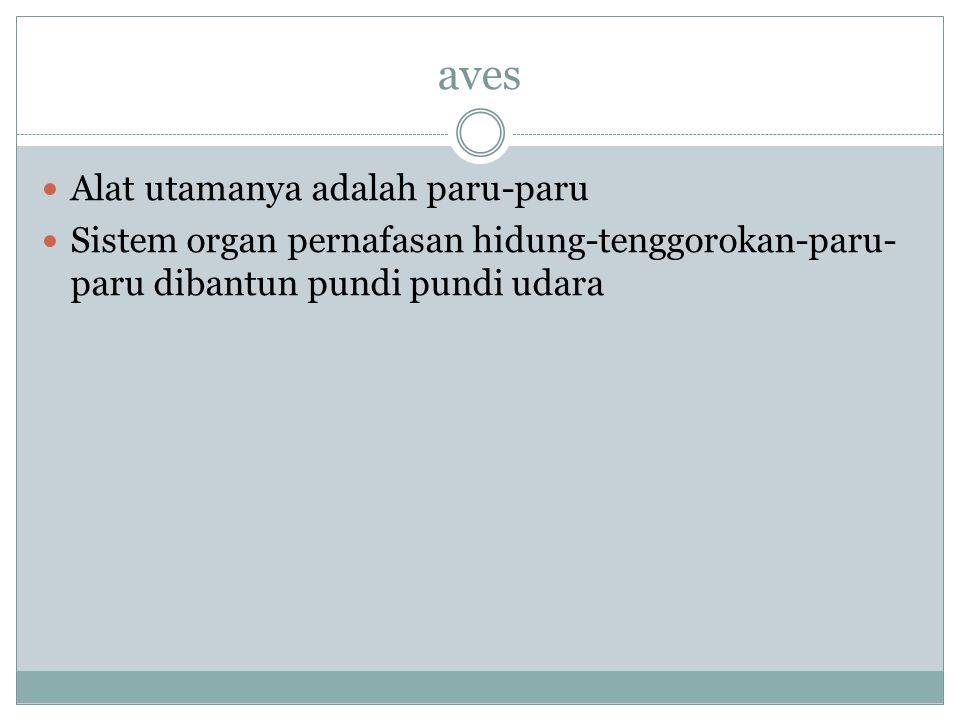 aves Alat utamanya adalah paru-paru