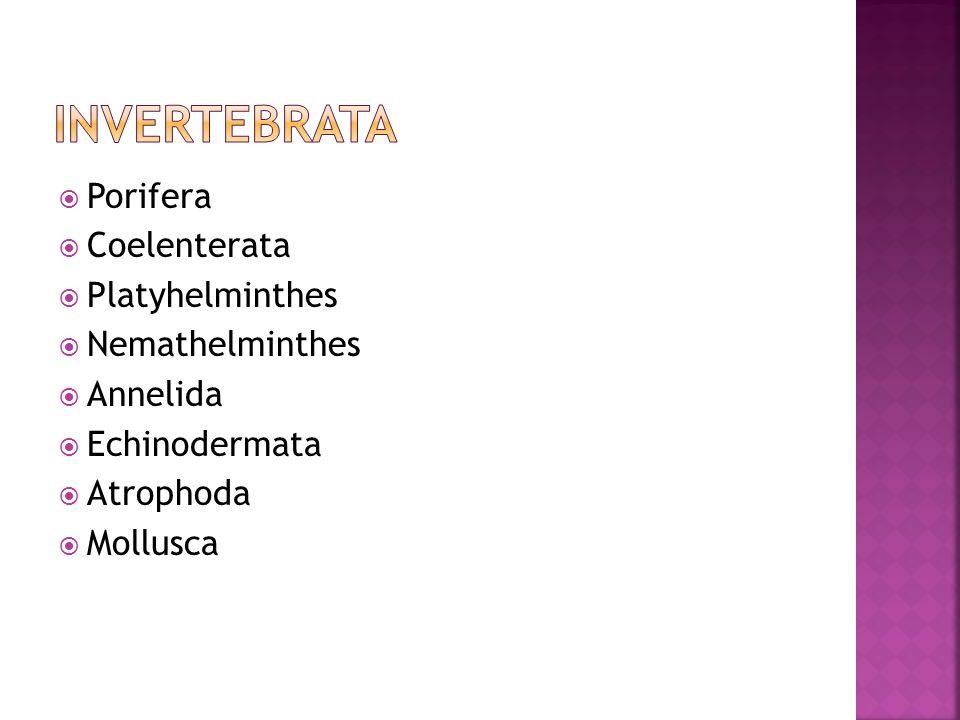 Invertebrata Porifera Coelenterata Platyhelminthes Nemathelminthes