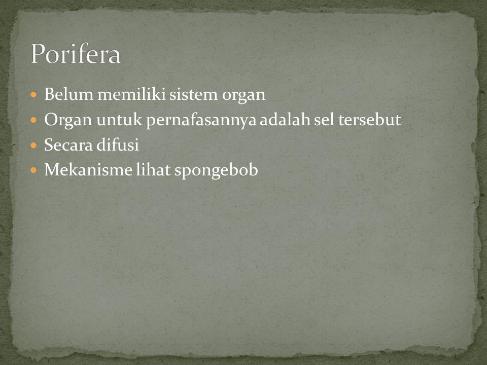 Porifera Belum memiliki sistem organ