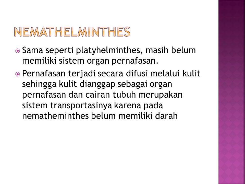 nemathelminthes Sama seperti platyhelminthes, masih belum memiliki sistem organ pernafasan.