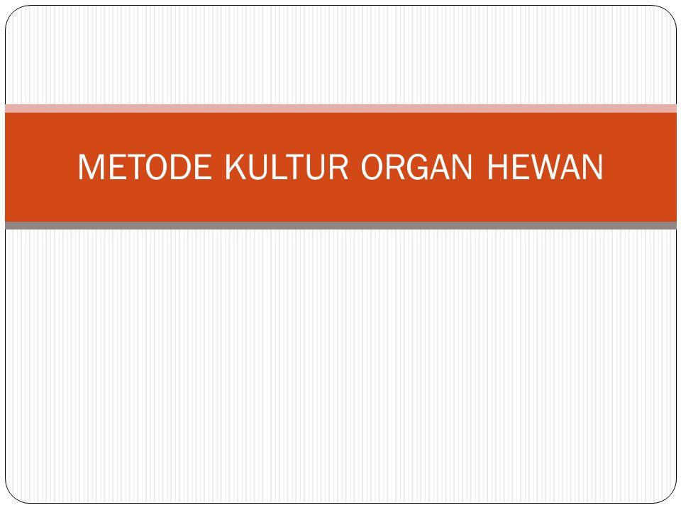 METODE KULTUR ORGAN HEWAN
