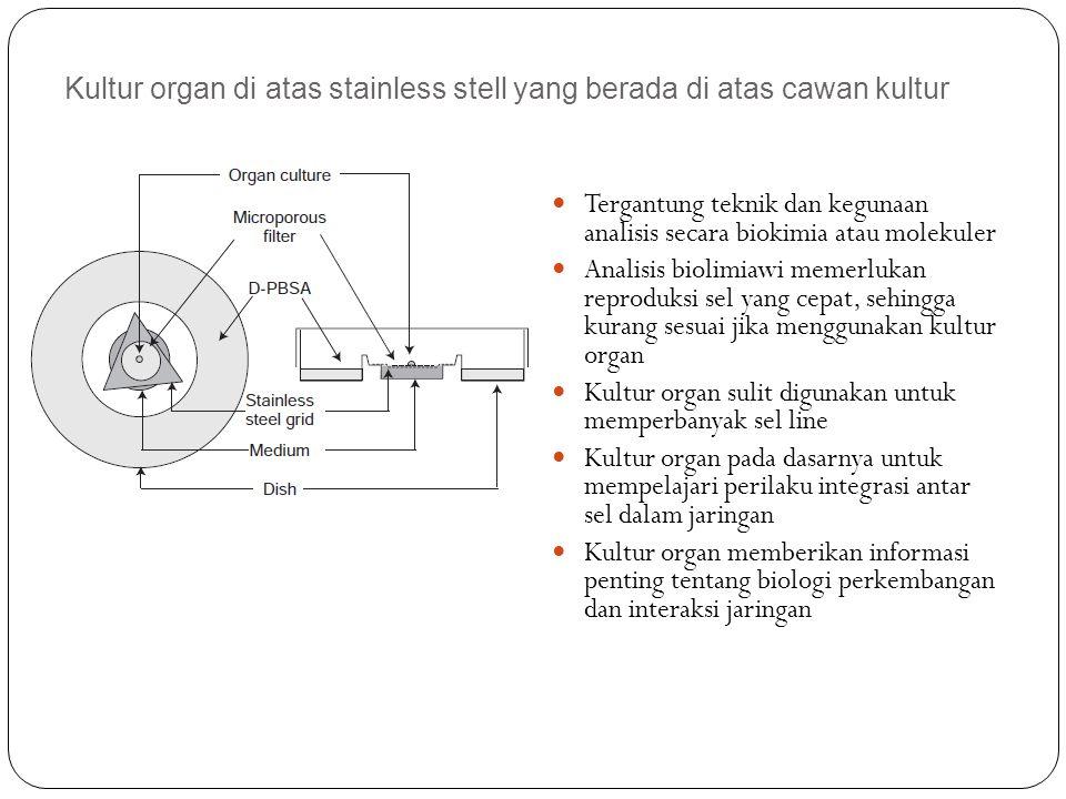 Kultur organ di atas stainless stell yang berada di atas cawan kultur