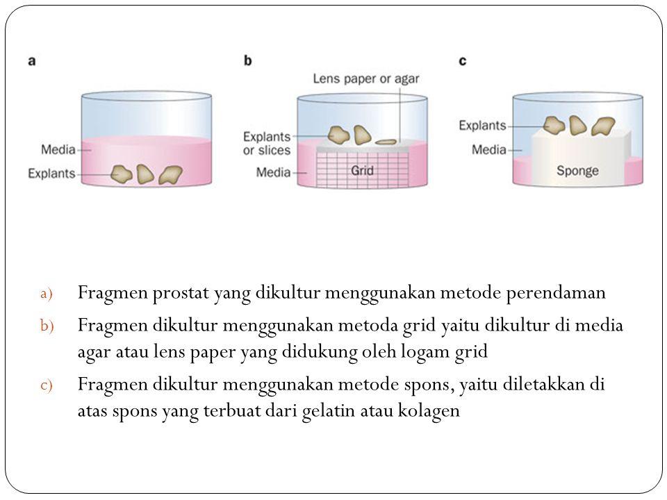 Fragmen prostat yang dikultur menggunakan metode perendaman