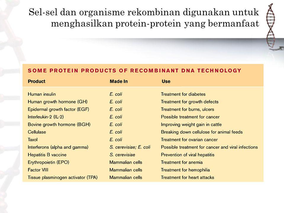 Sel-sel dan organisme rekombinan digunakan untuk menghasilkan protein-protein yang bermanfaat