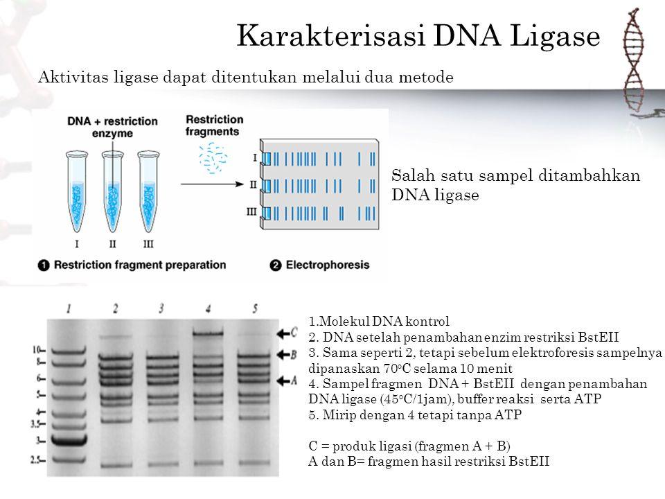 Karakterisasi DNA Ligase
