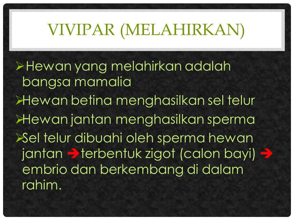 VIVIPAR (Melahirkan) Hewan yang melahirkan adalah bangsa mamalia