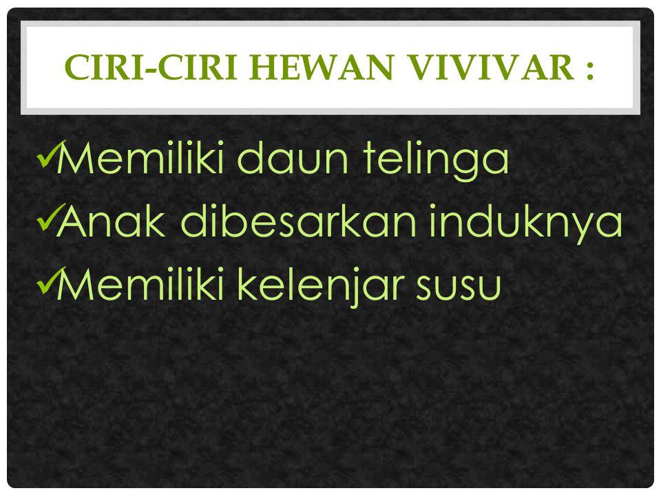 Ciri-Ciri Hewan Vivivar :