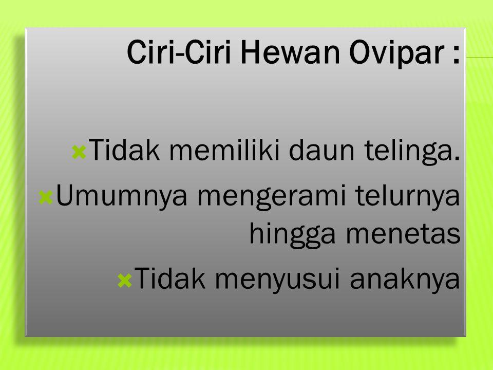 Ciri-Ciri Hewan Ovipar :