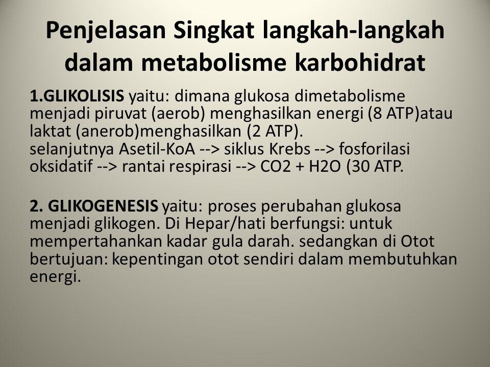 Penjelasan Singkat langkah-langkah dalam metabolisme karbohidrat