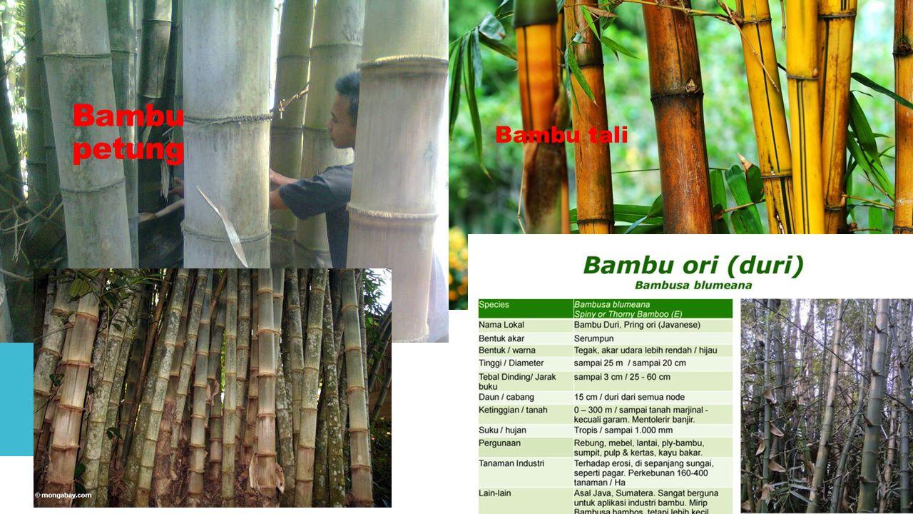 Bambu petung Bambu tali Bambu gombong