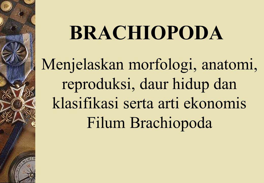 BRACHIOPODA Menjelaskan morfologi, anatomi, reproduksi, daur hidup dan klasifikasi serta arti ekonomis Filum Brachiopoda.