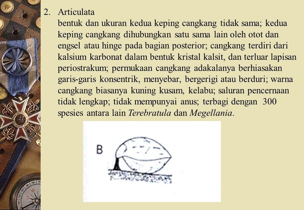 Articulata