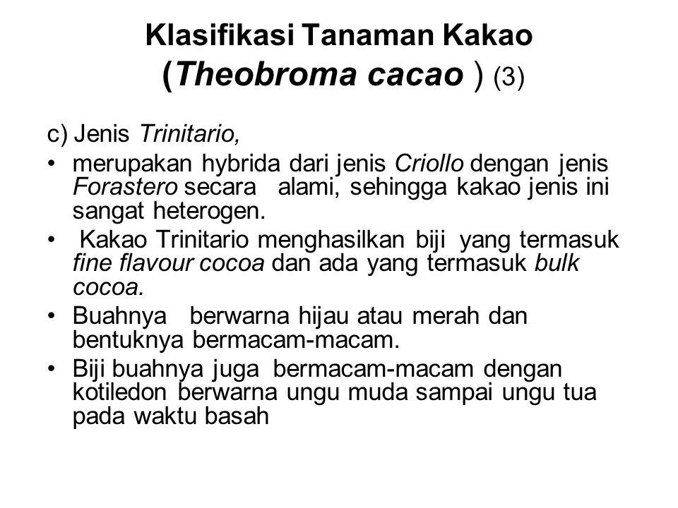 Klasifikasi Tanaman Kakao (Theobroma cacao ) (3)