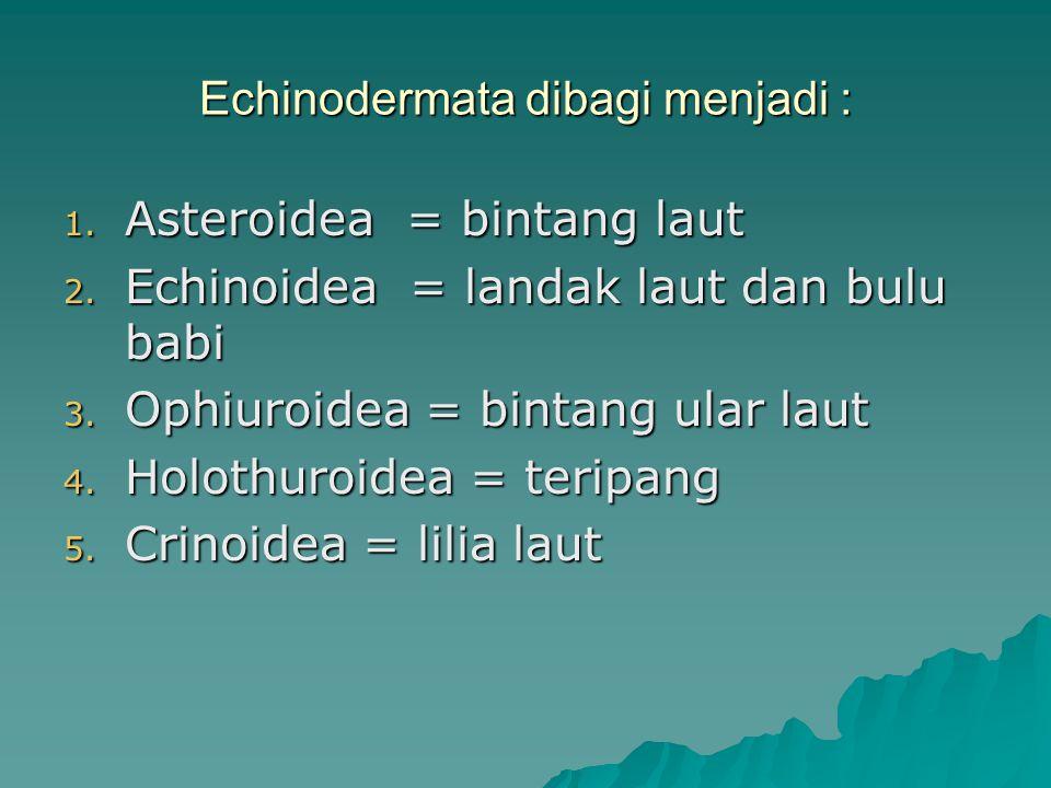 Echinodermata dibagi menjadi :