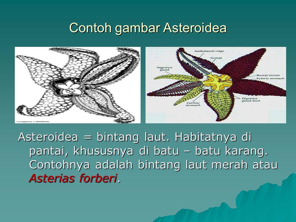 Contoh gambar Asteroidea