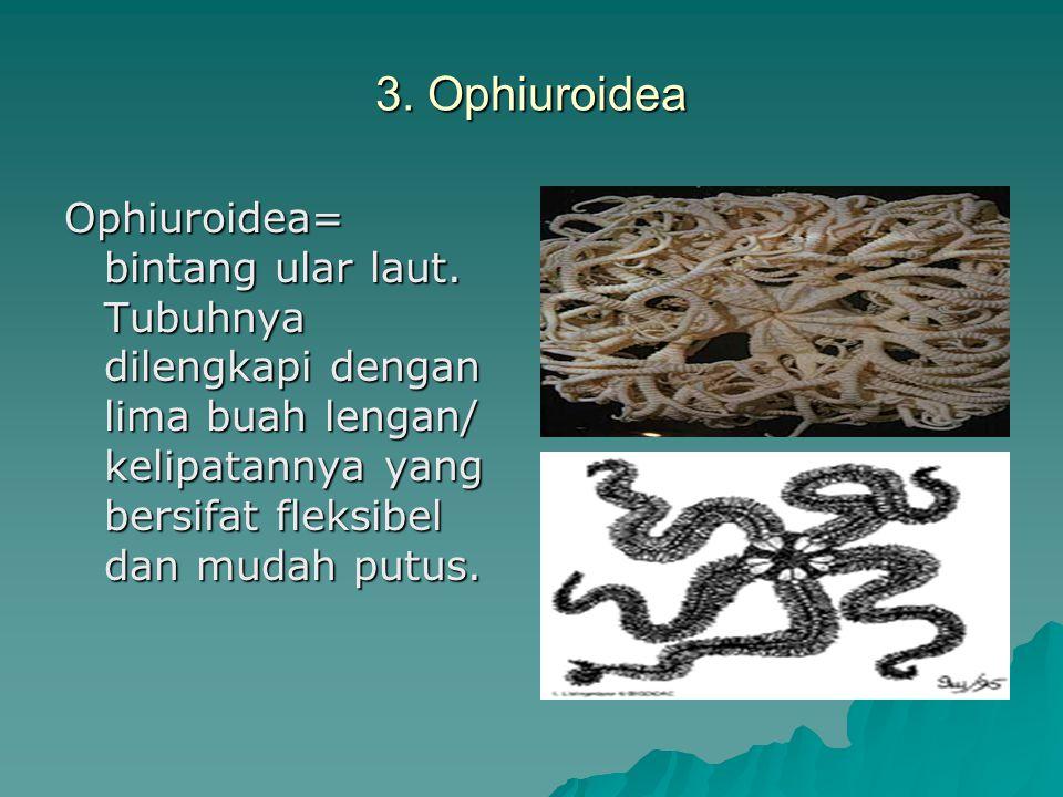 3. Ophiuroidea Ophiuroidea= bintang ular laut.