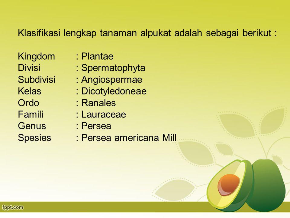 Klasifikasi lengkap tanaman alpukat adalah sebagai berikut : Kingdom