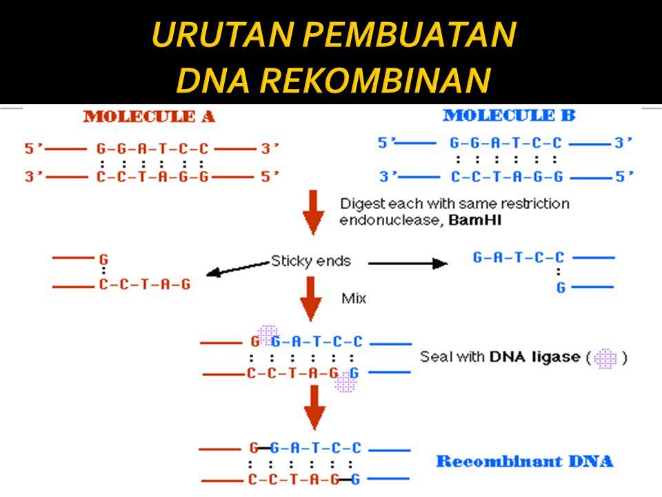 URUTAN PEMBUATAN DNA REKOMBINAN