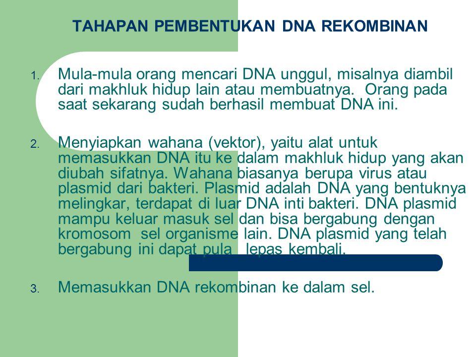 TAHAPAN PEMBENTUKAN DNA REKOMBINAN