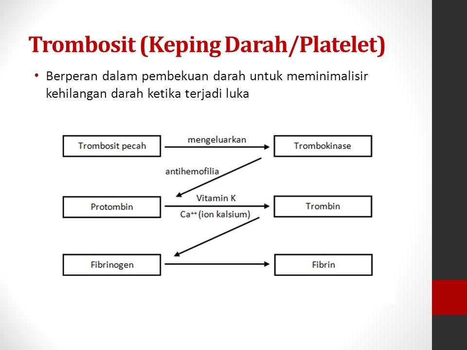 Trombosit (Keping Darah/Platelet)