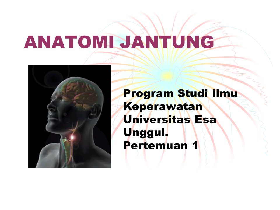 ANATOMI JANTUNG Program Studi Ilmu Keperawatan Universitas Esa Unggul.
