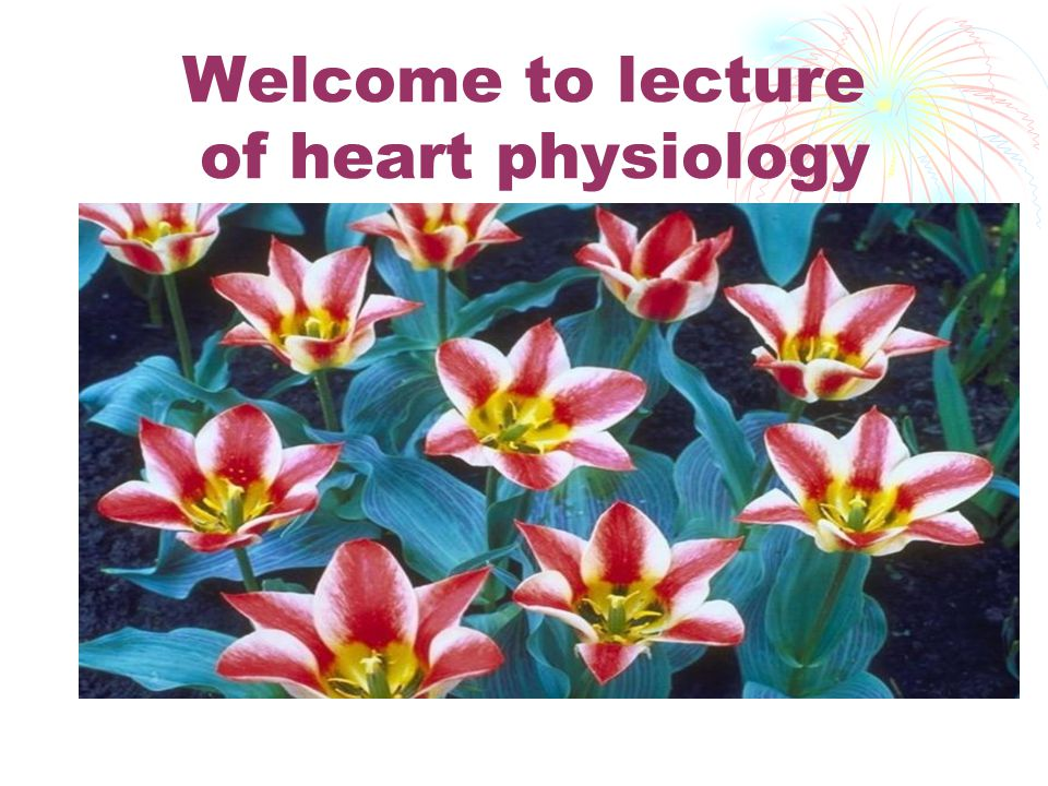 Welcome to lecture of heart physiology